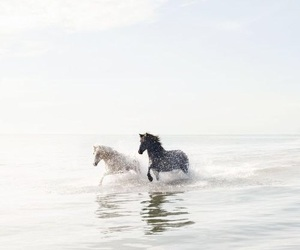 horse, sea, and animal image