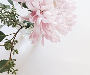 flowers, pink, and lovely image