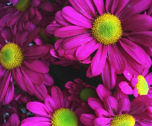 colors, flower, and wallpaper image