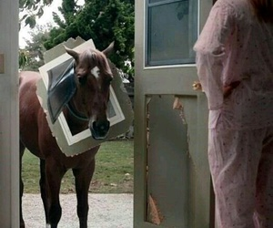 funny, horse, and ooops image