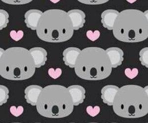 Koala and wallpaper image