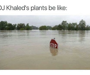 funny, dj khaled, and plants image