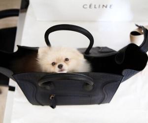 dog, cute, and fashion image