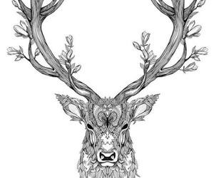 cervo image