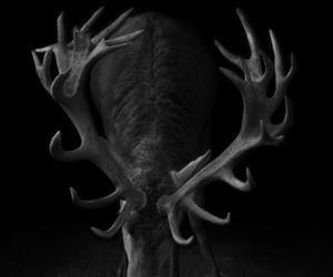 animal, viado, and chifres image