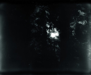 black and white, forest, and polaroid image