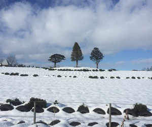 trees, winter, and snow blanket image