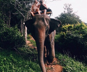 elephant, green, and summer image