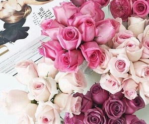 beautiful, rose, and flower image