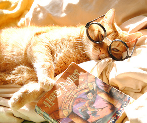cat, harry potter, and book image