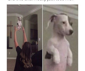 animal, puppy, and comic image