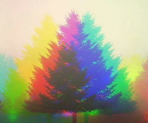 colors and tree image