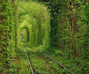 green, nature, and ukraine image