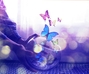 butterflies and magical image