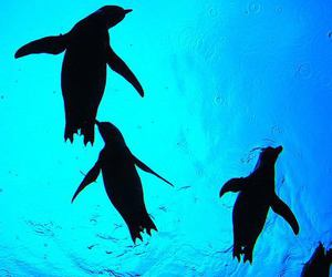 animal, penguin, and water image