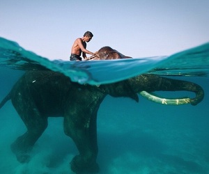 elephant, animal, and ocean image