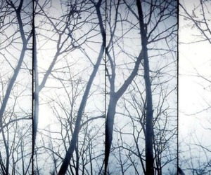 forest, photography, and lomo image
