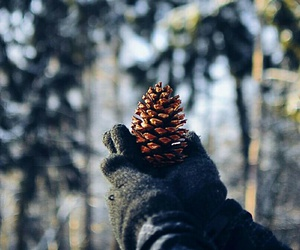 fir cone, woods, and pone cone image