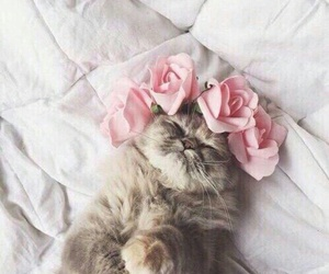animals, cat, and beauty image