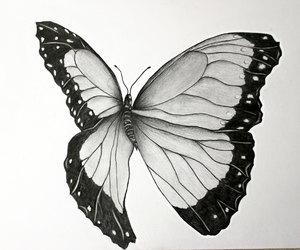 art, black and white, and butterfly image
