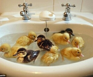 ducks and washbasin image