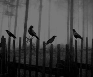 bird, cold, and dark image