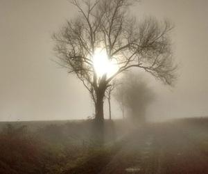 gloomy, nature, and sad image