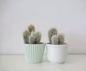 cactus, plants, and pale image