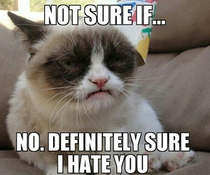 grumpy cat, hate, and funny image