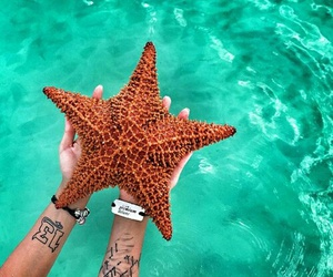 starfish, summer, and water image