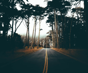 road and trees image