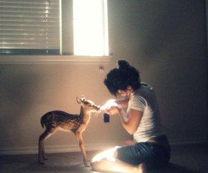 animal, girl, and photography image