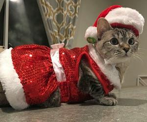 cats, christmas, and xmas image
