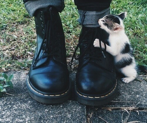 cat, boots, and shoes image