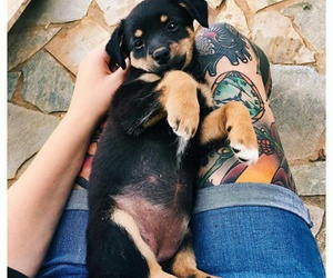 dog, style, and Tattoos image