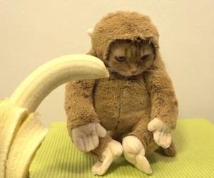 amazing, cat, and banana image