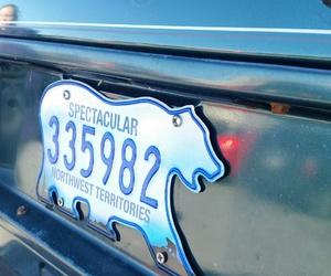 license plate, Polar Bear, and unique image