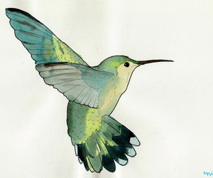 bird, drawing, and hummingbird image
