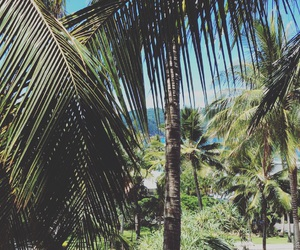 filter, palm trees, and my photo image