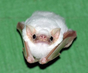 bat and cute image