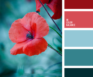 blue, color palette, and flower image