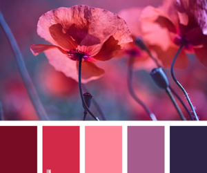 color palette, flower, and poppy image