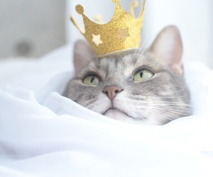 cat, animal, and crown image