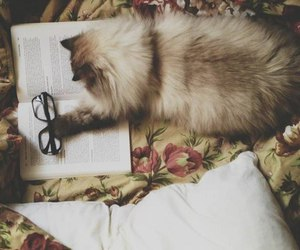 book, cat, and photography image