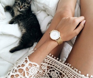 cat, dress, and classy image