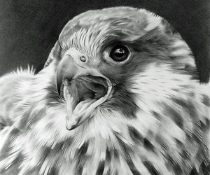animals, art, and bird image