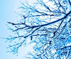 branches, snow, and trees image