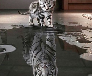 cat, gato, and reflection image