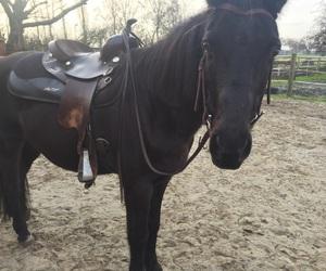 horse, pferde, and western image