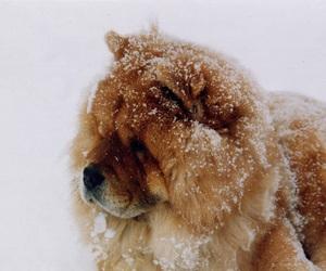 dog, animal, and winter image